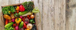 Il Master in Alimentazione e Dietetica Vegetariana FUNIBER -UNIVPM ottiene il Patrocinio della Società Scientifica di Nutrizione Vegetariana