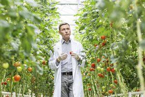 Nuovo Master online in Qualità e Sicurezza nelle Filiere Alimentari